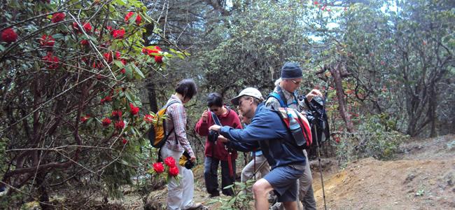 Bhutan Laya Gasa Trekking