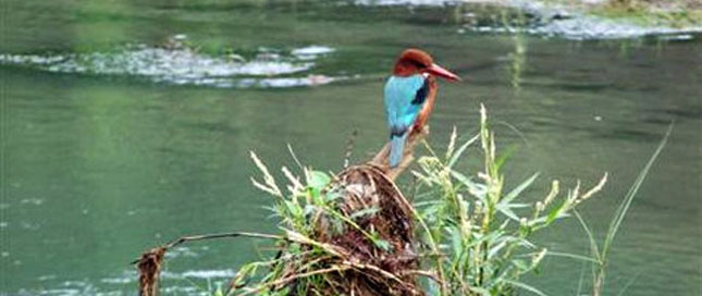 Best of Nepal Birding Tour
